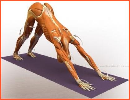 yoga dd