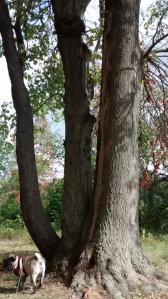 tree park half maple half oak