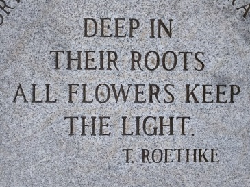 deep-in-their-roots