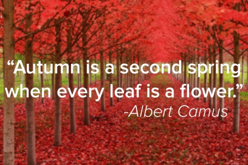 autumn-camus-quote